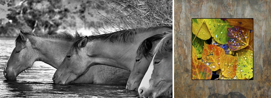 Hooves on the Mesa | Photography on Natural Slate